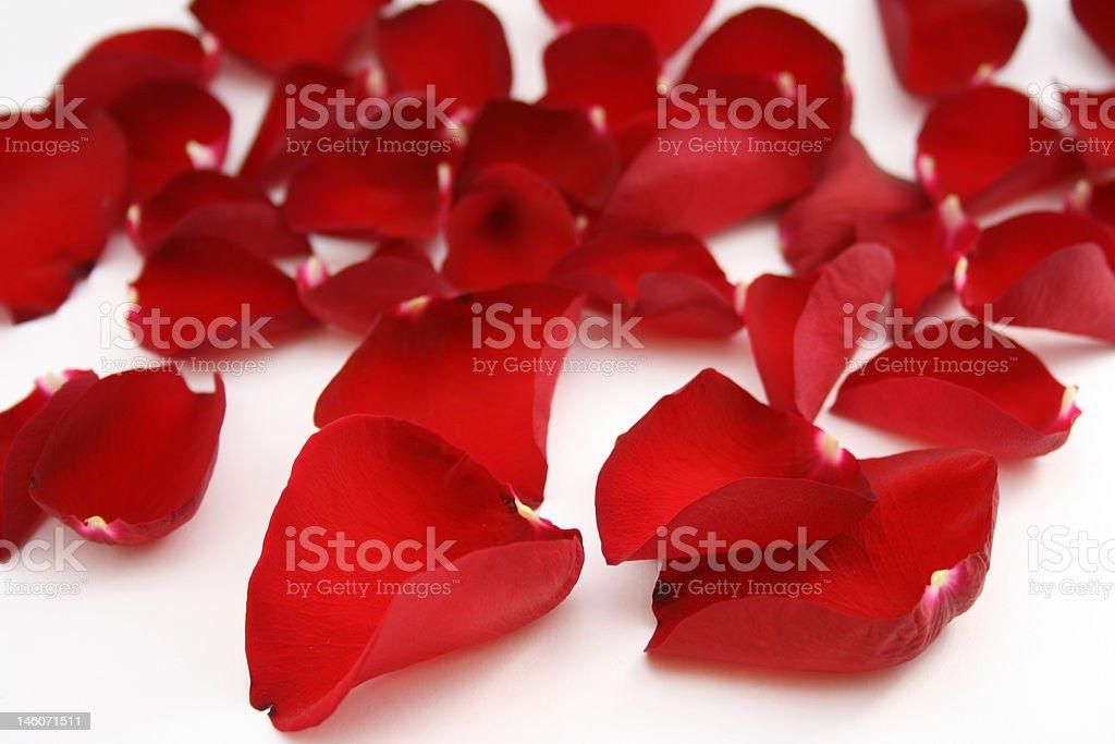 Helle Rote Rosenblätter Lizenzfreies stock-foto