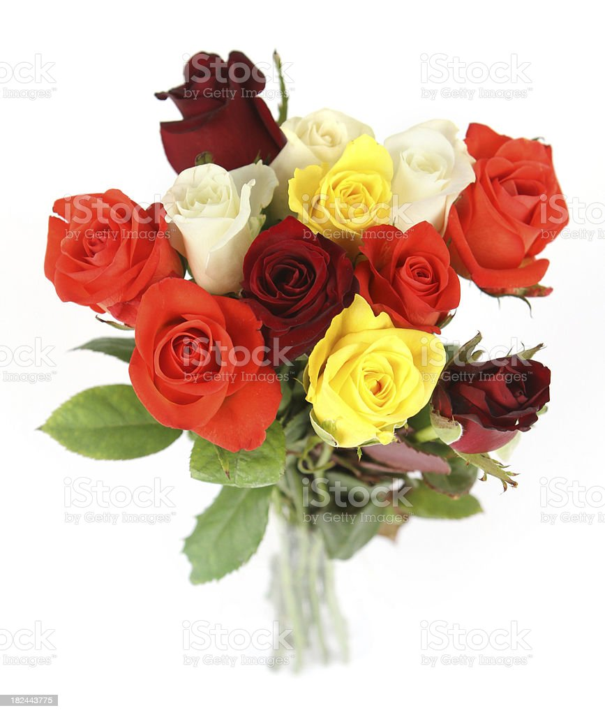 Bright Roses royalty-free stock photo