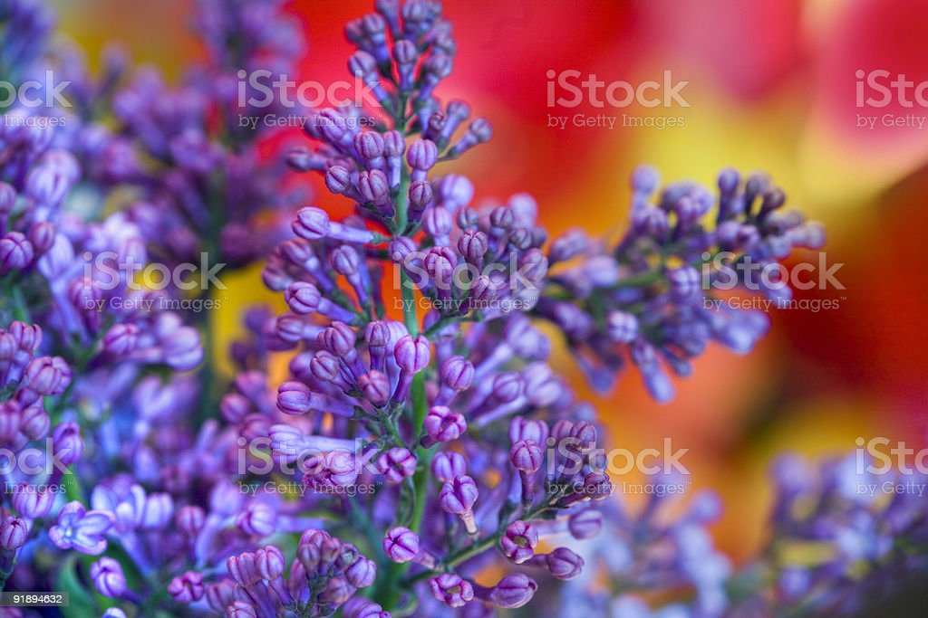 Bright Smell royalty-free stock photo