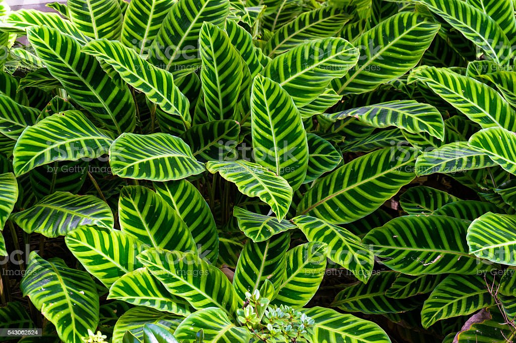 Bright stripy leaves background stock photo