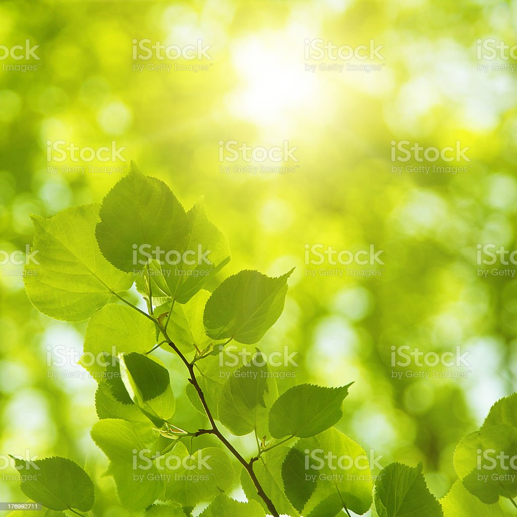 Bright sun in spring forest. stock photo