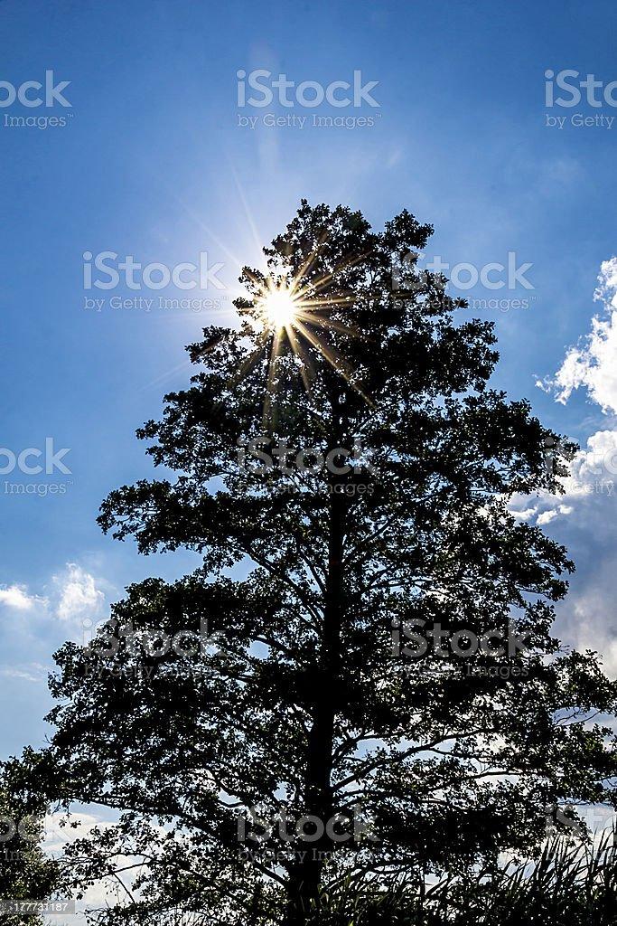 bright sun through a tree stock photo