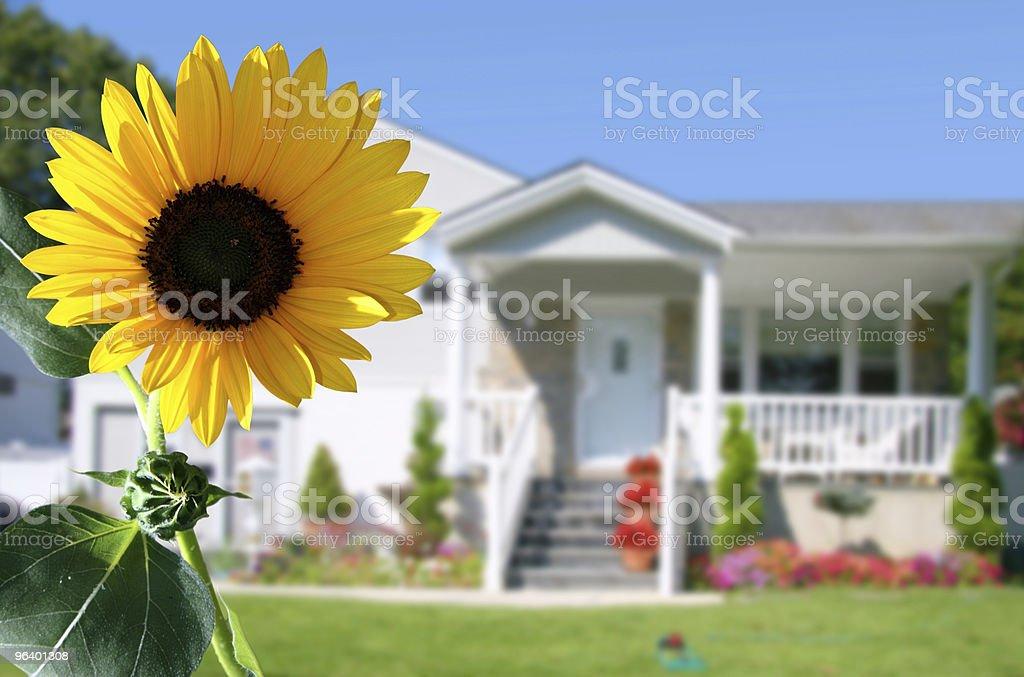 Bright sunflower royalty-free stock photo