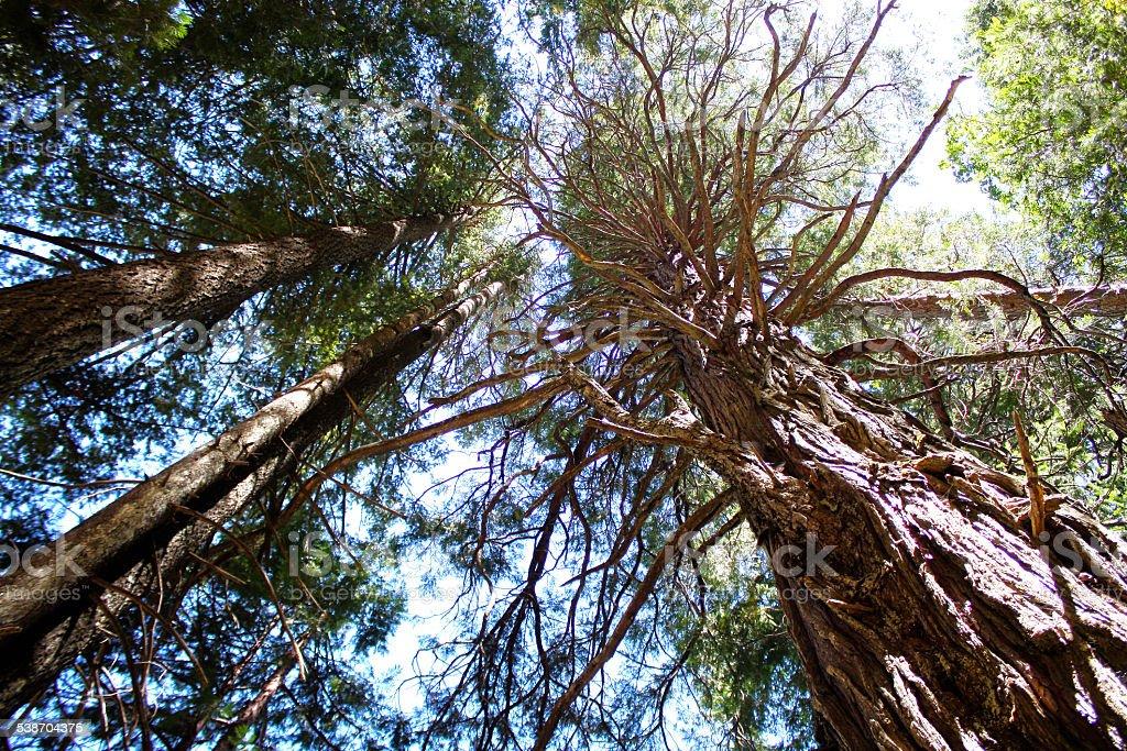 Bright Treetops in Yosemite National Park stock photo