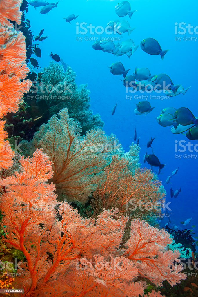 Bright tropical underwater world stock photo