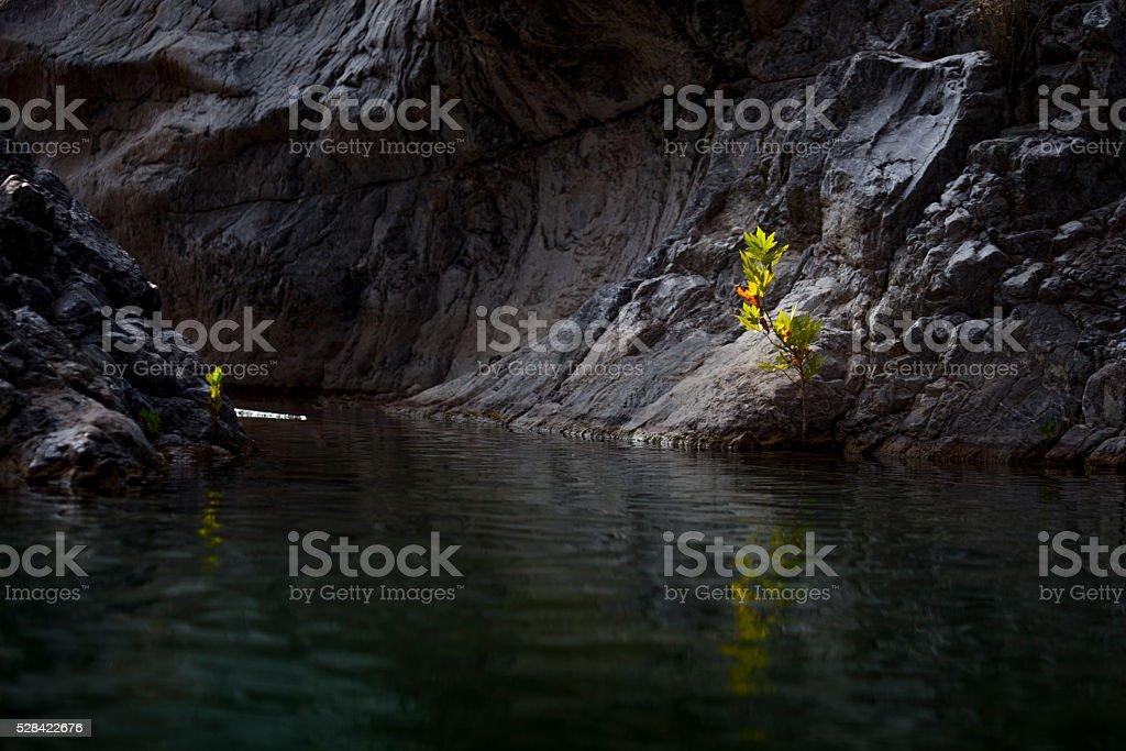 Bright weed in dark rock stock photo