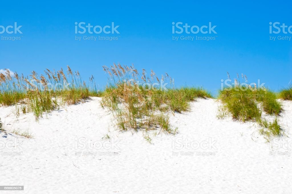 Bright white sand dune coverd with beach oats stock photo