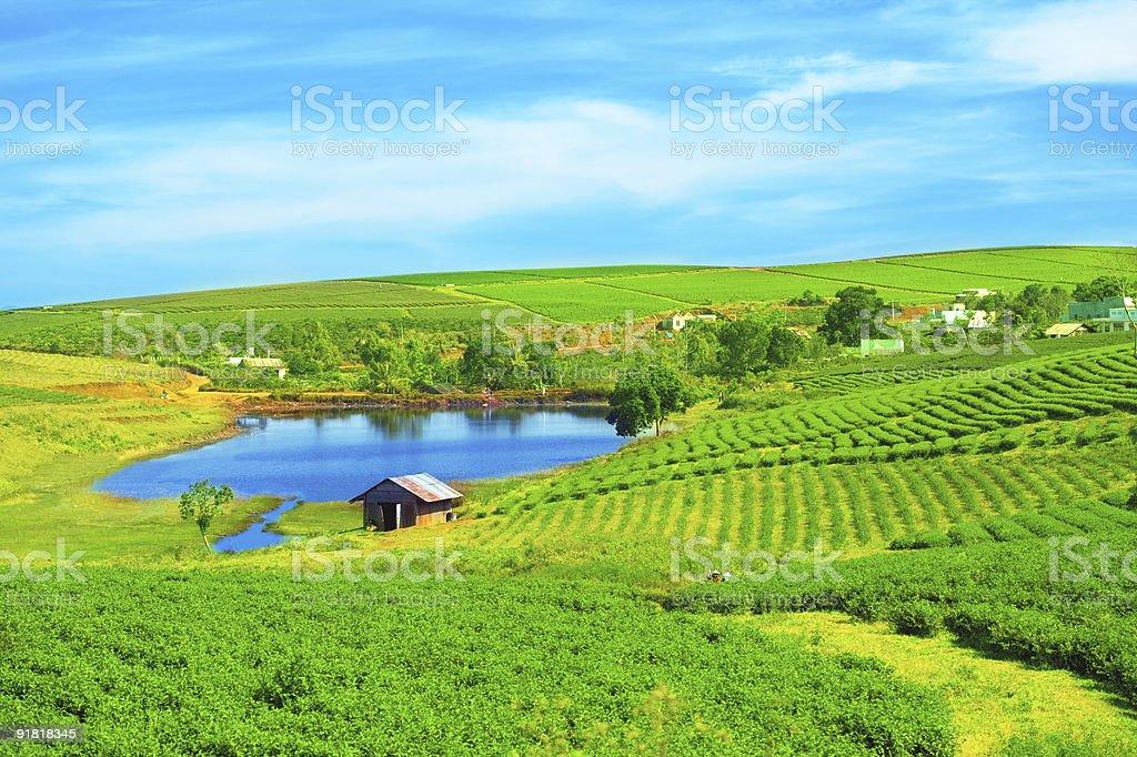 Bright wide shot of a tea plantation royalty-free stock photo