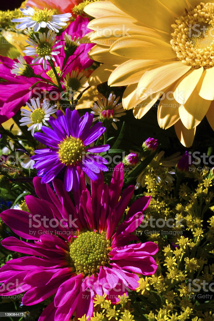 Bright Wildflowers royalty-free stock photo