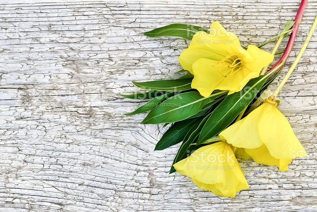 Bright yellow bouquet of evening primrose (Oenothera) stock photo