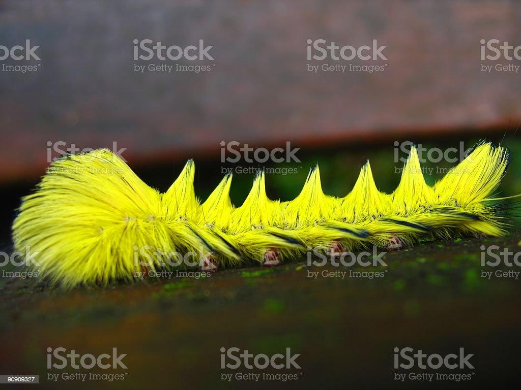 Bright Yellow Caterpillar royalty-free stock photo