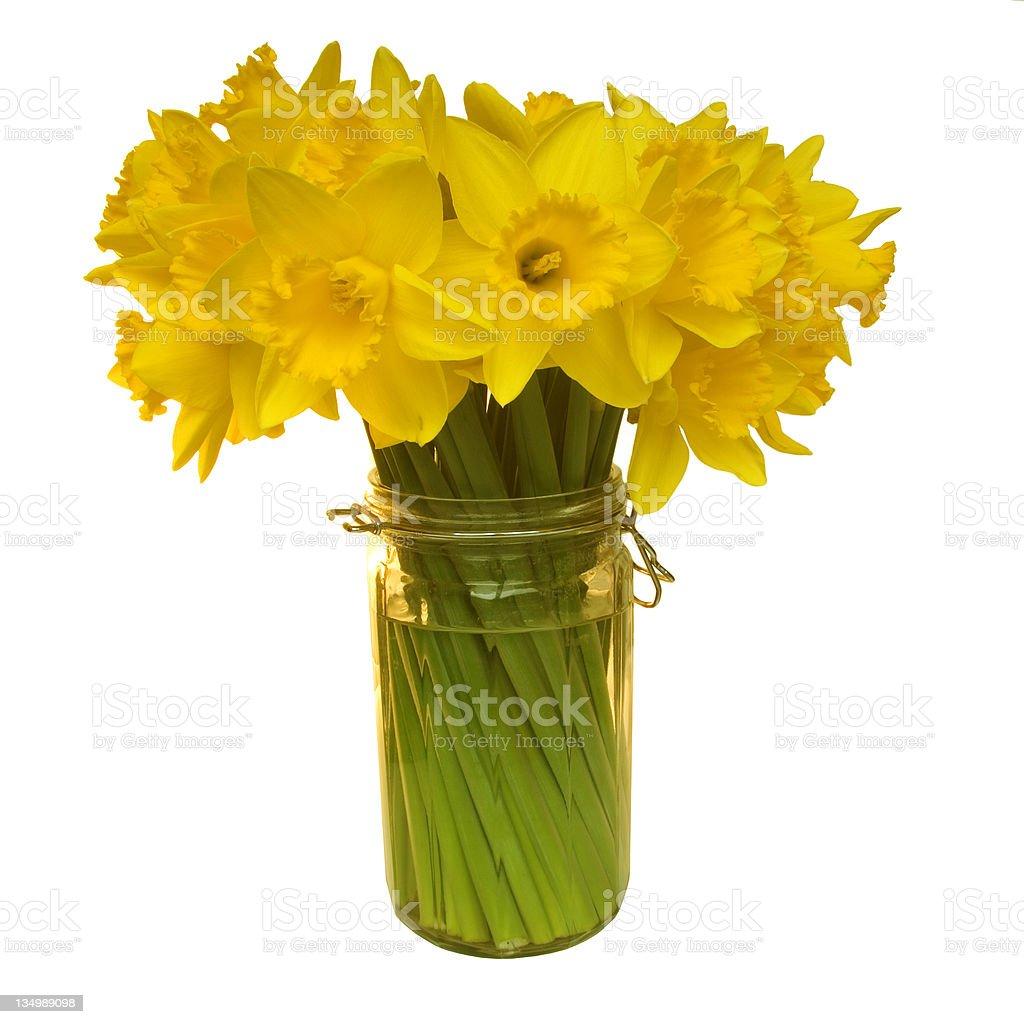 Bright yellow daffodils royalty-free stock photo