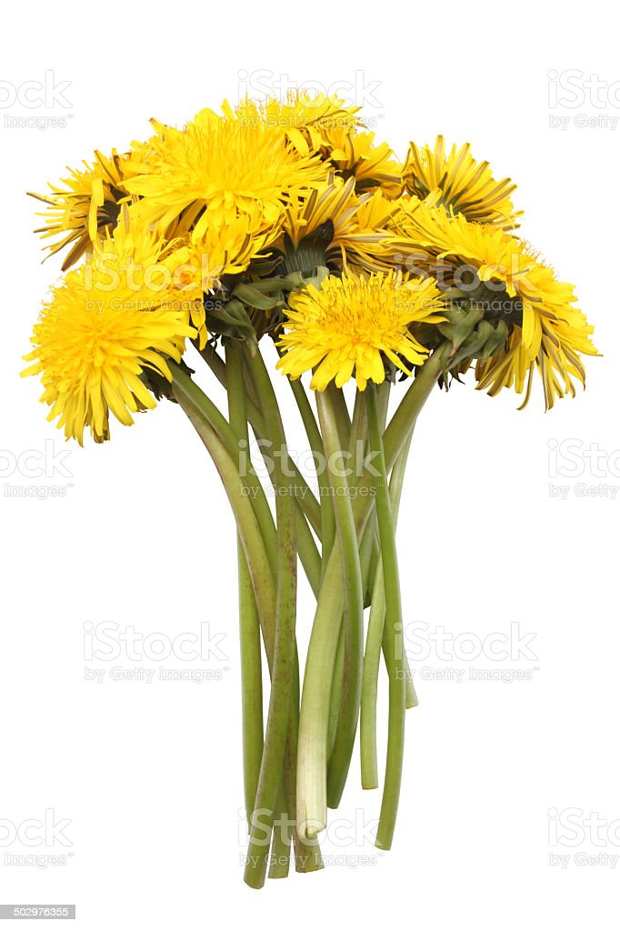 Bright yellow dandelions stock photo
