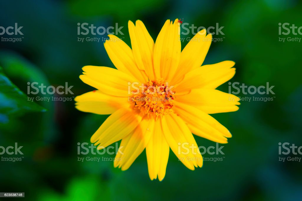Bright Yellow Flower stock photo