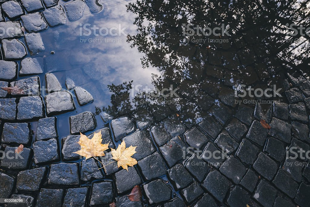 Bright yellow leaves in puddle on ground stock photo