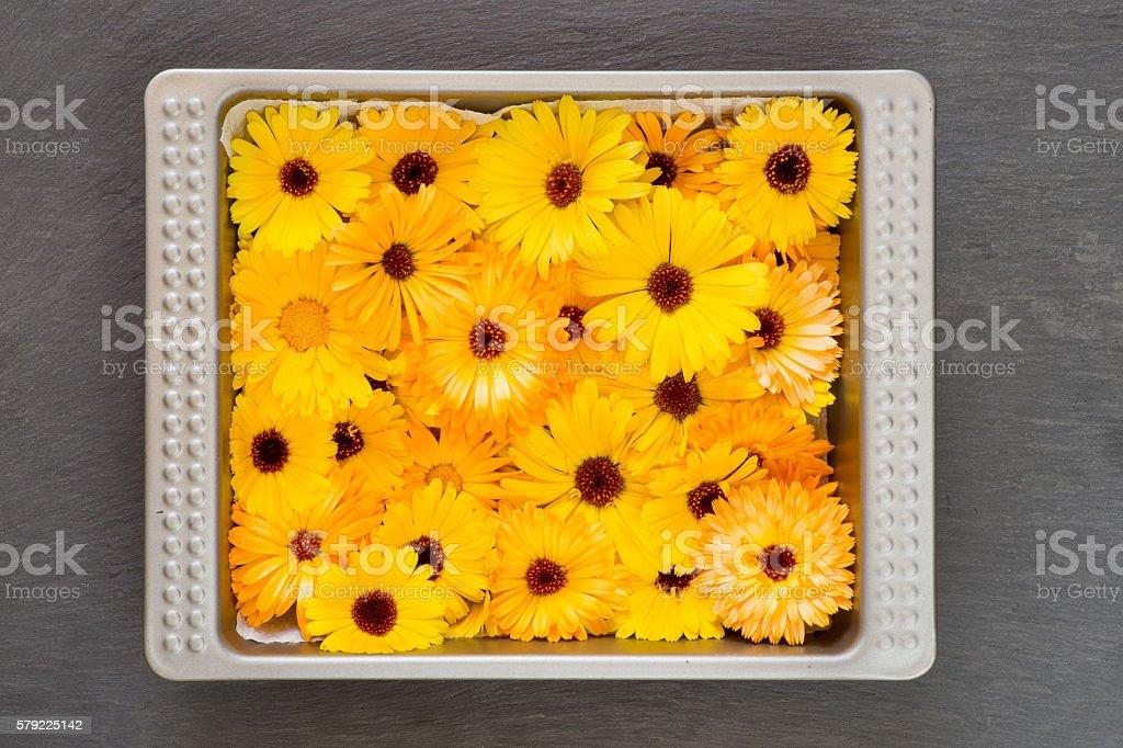 Bright Yellow Orange Flower Heads Pot Marigold Calendula Officin stock photo