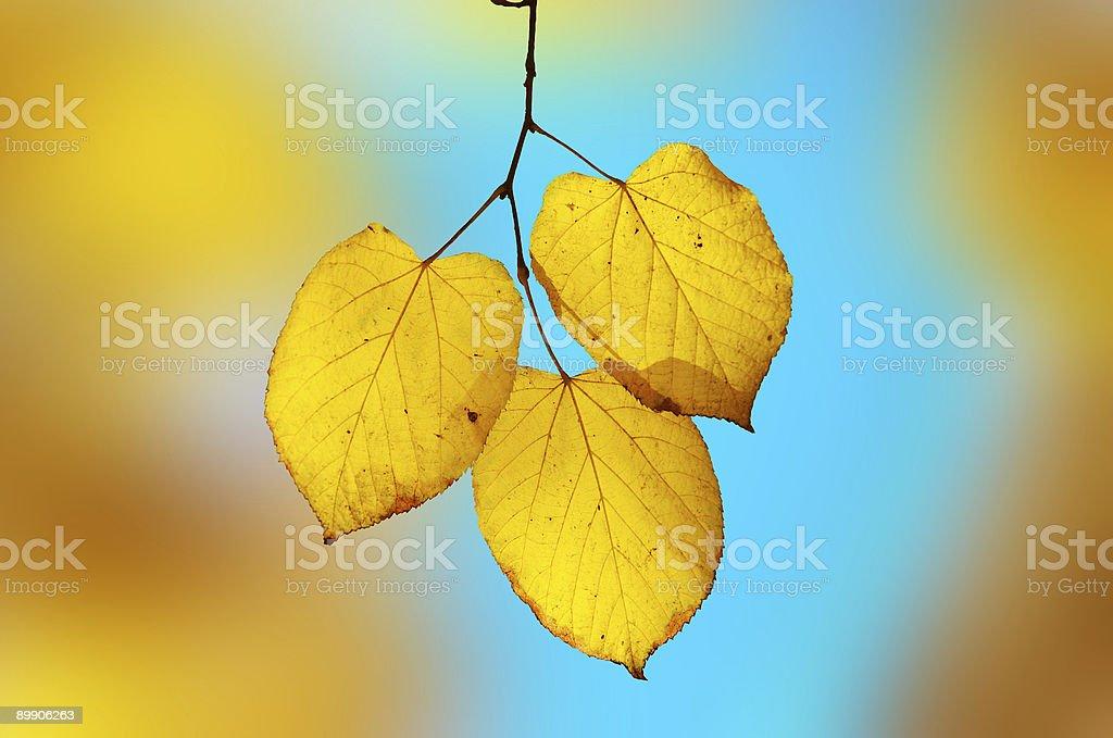 Bright yellow-blue elegy. Shallow DOF. royalty-free stock photo
