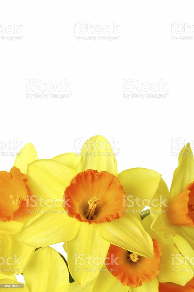Brighten up your day! royalty-free stock photo
