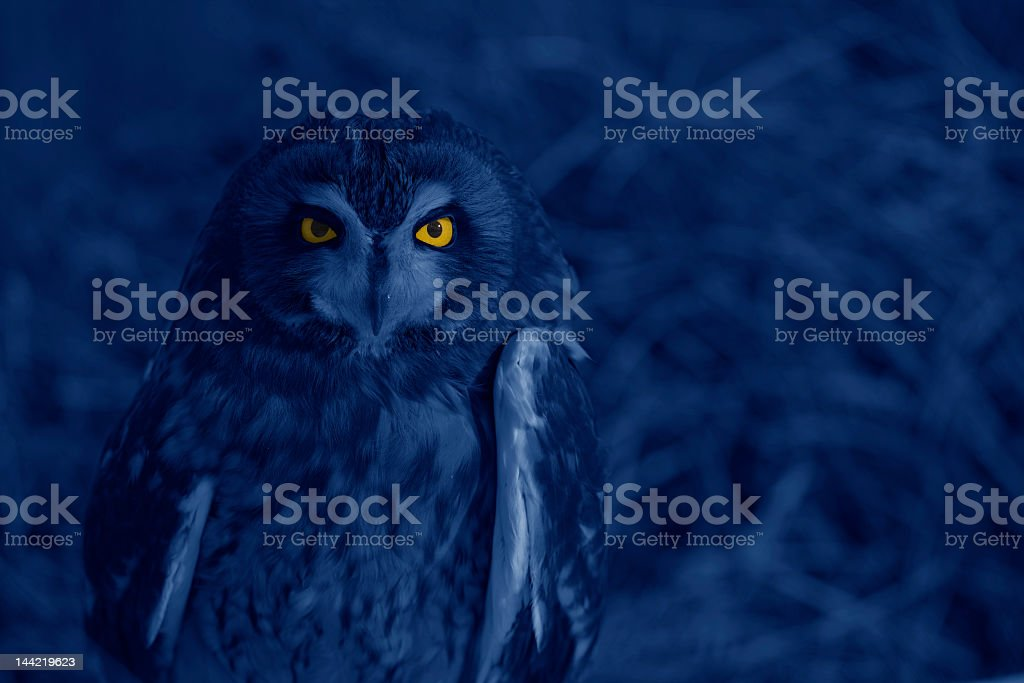 Bright-eyed owl at night royalty-free stock photo