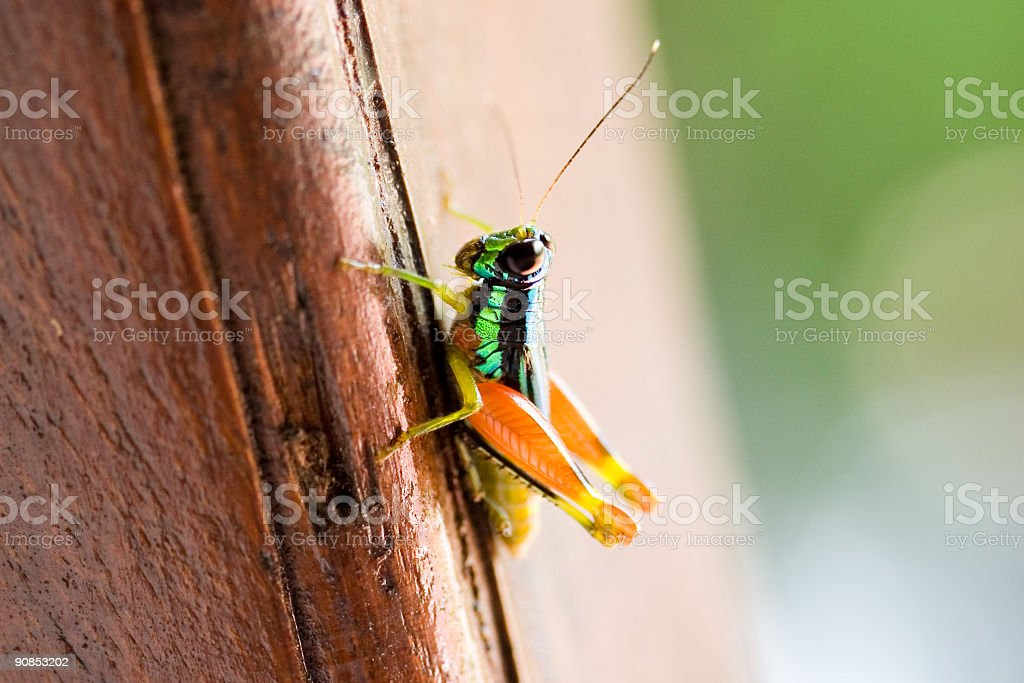 Brightly colored insect royalty-free stock photo