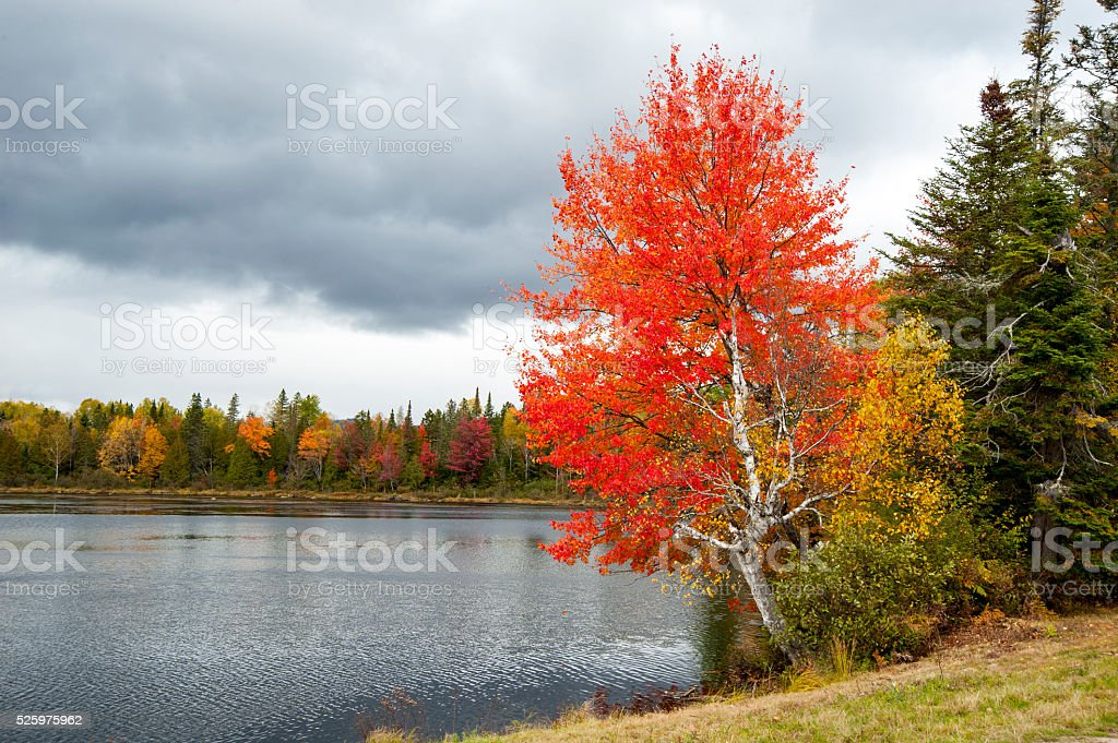 Brightly colored tree stock photo
