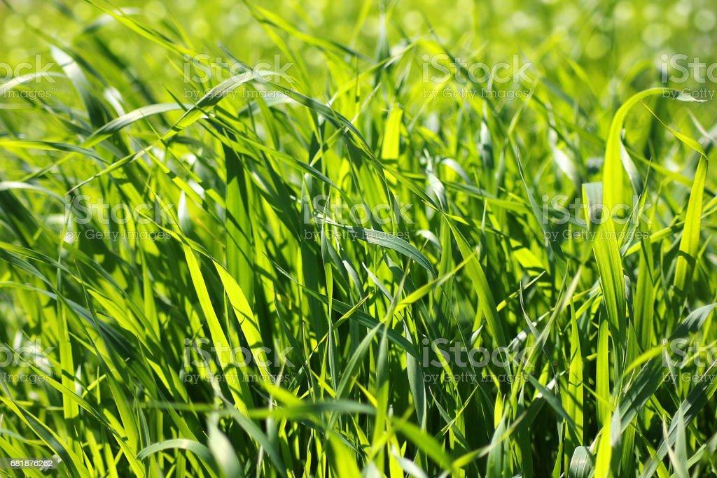 brightly lit fresh green grass stock photo