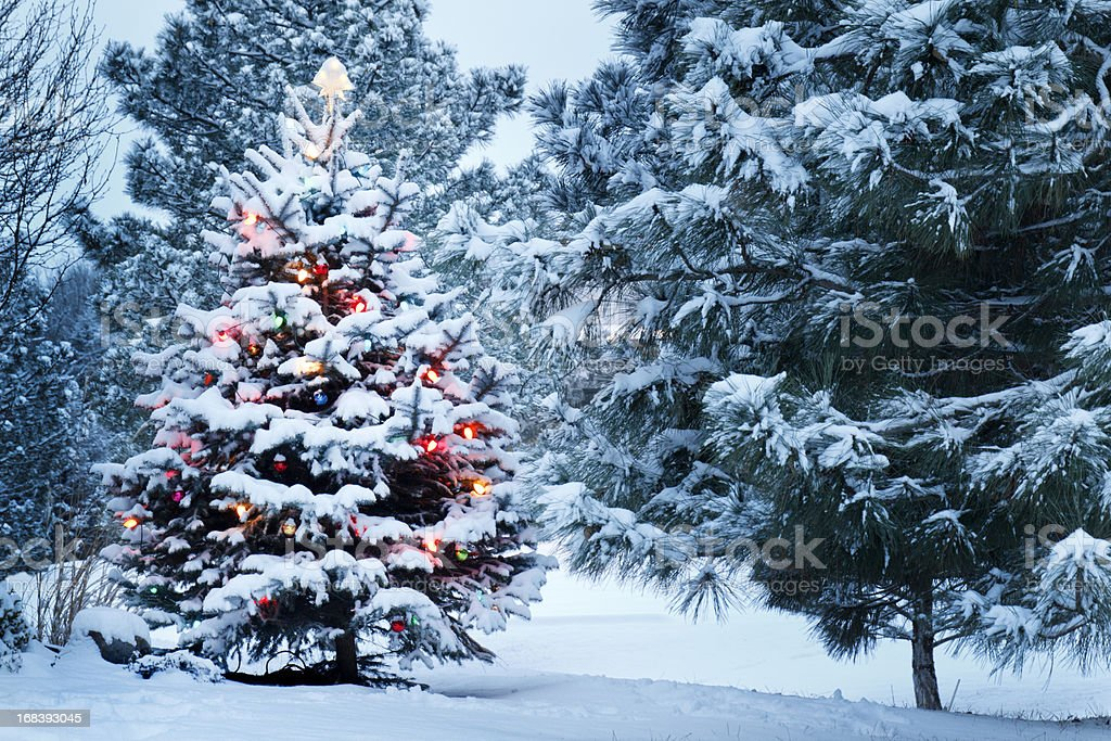 Brightly Lit Snow Covered Christmas Tree In Snowstorm stock photo
