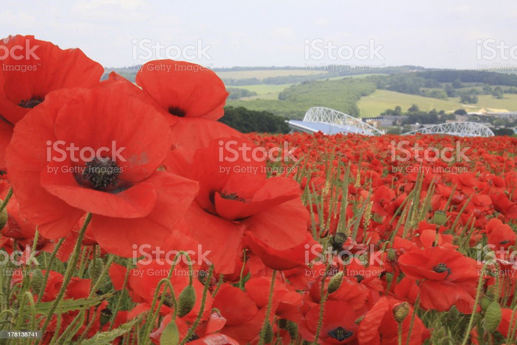 Brighton and Hove Albion Stadium with poppies royalty-free stock photo