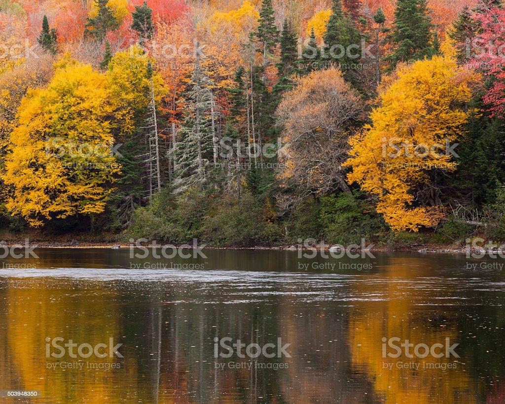 Brilliant Autumn Foliage Reflected on the Androscoggin River stock photo