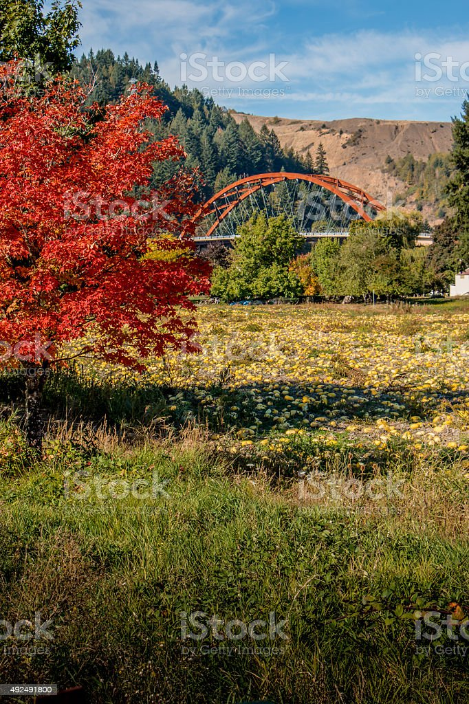 Brilliant Autumn Foliage Sauvie Island Bridge Portland Oregon Fall Squash stock photo