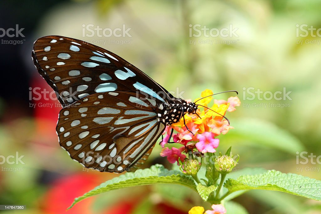 Brilliant butterfly royalty-free stock photo