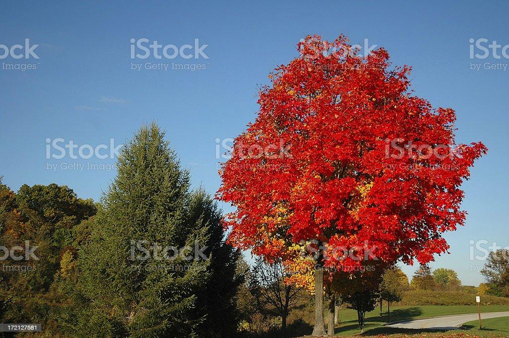 Brilliant Fall Foliage stock photo