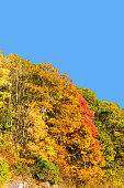 Brilliant Fall Trees on a Mountain Hillside
