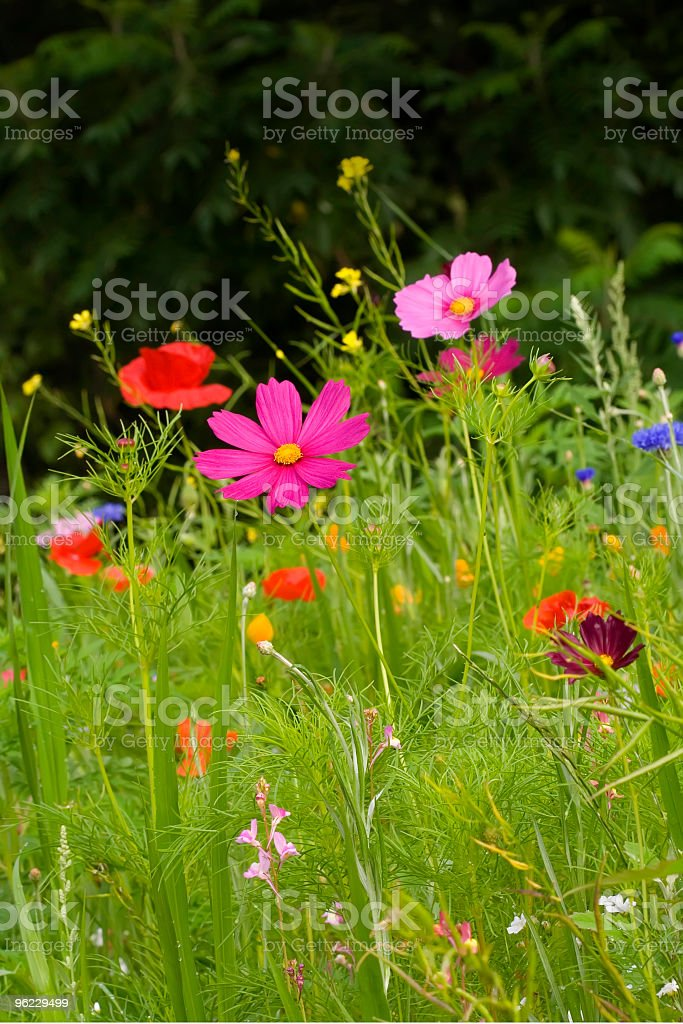 Brilliant Wildflowers stock photo