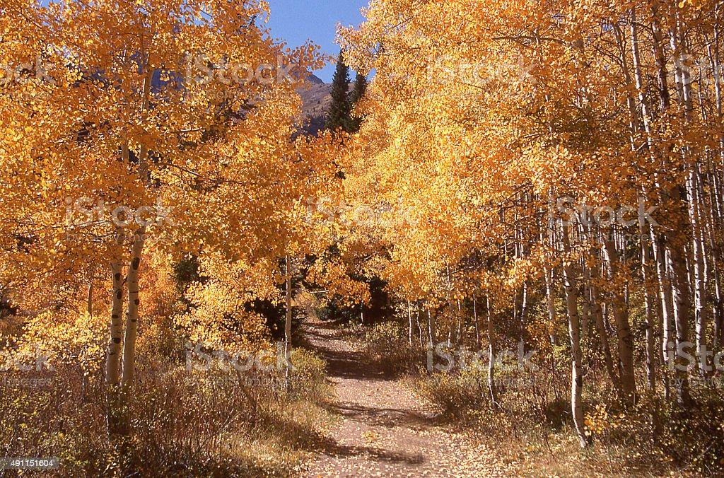 Brilliant Yellow autumn leaves and country road near Sundance Utah stock photo