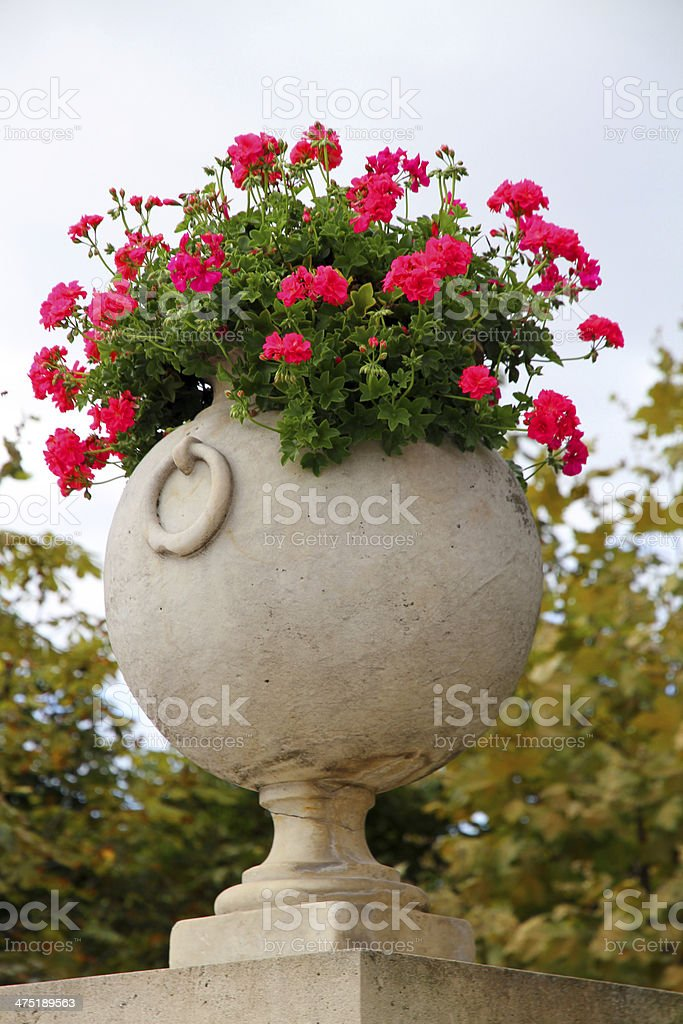 Brimming with Flowers royalty-free stock photo