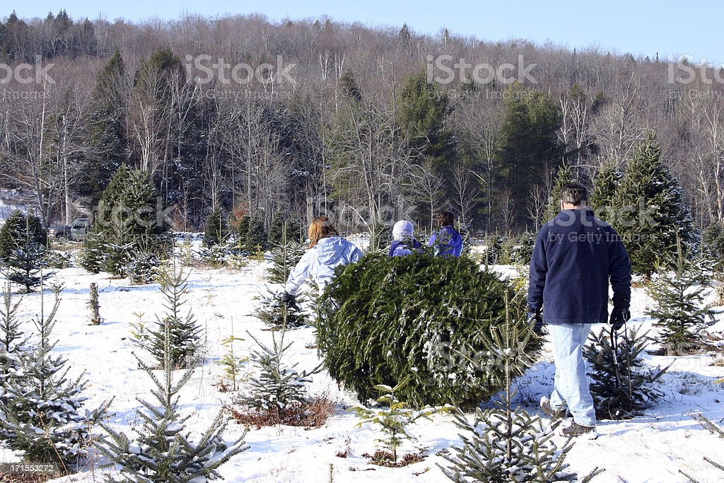 bringing home our christmas tree royalty-free stock photo