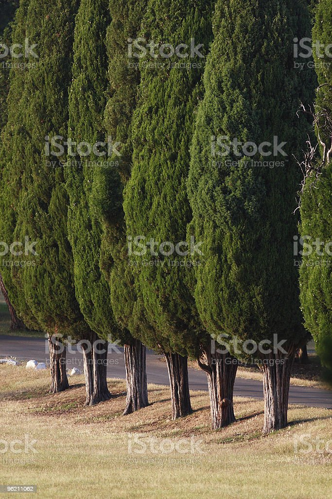 Brioni cypress park royalty-free stock photo