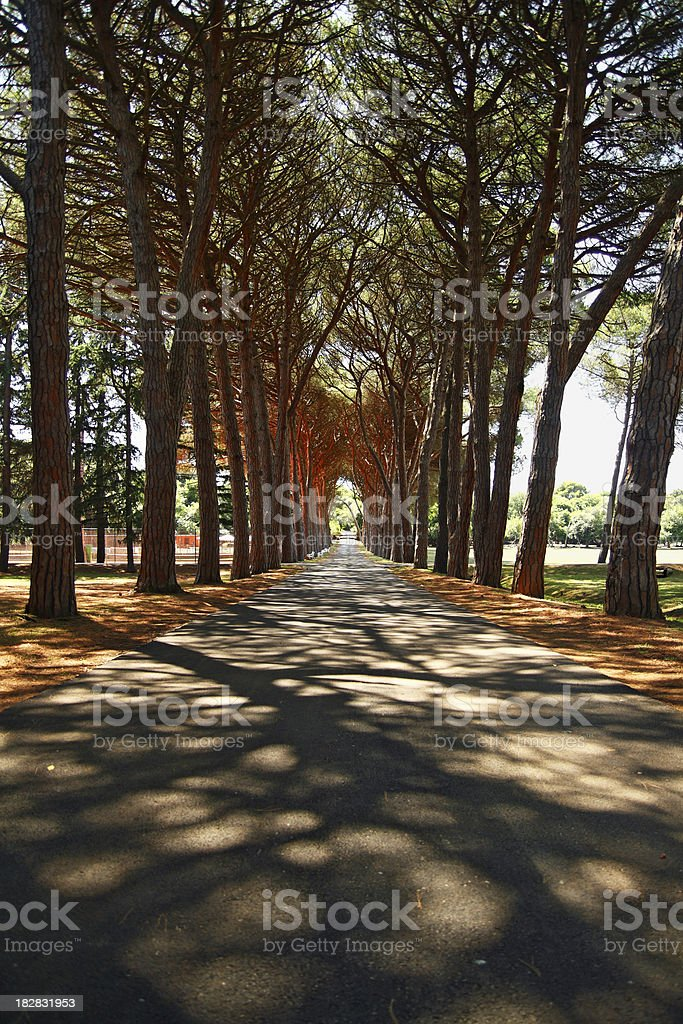 Brioni National Park, Istria stock photo