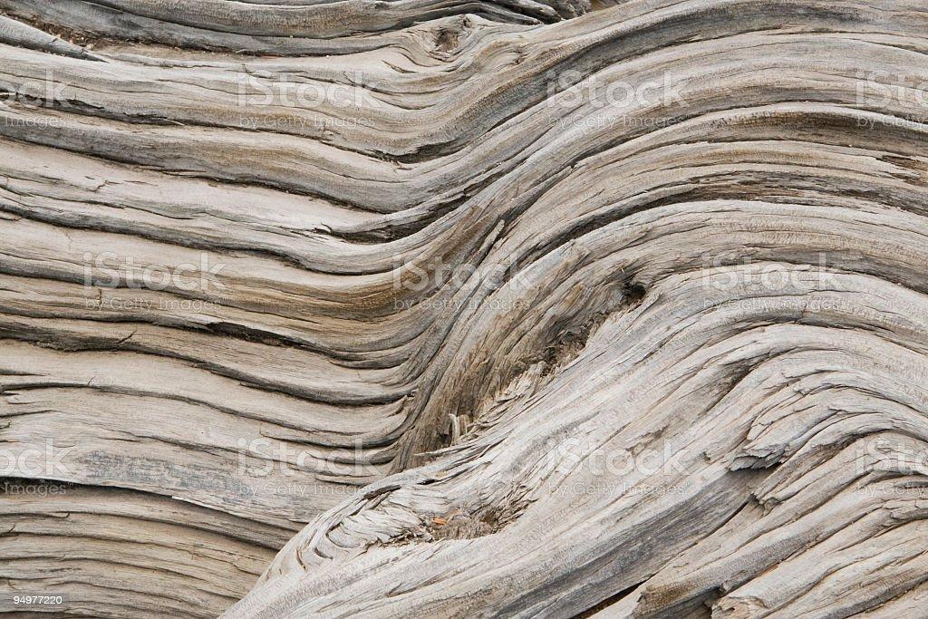 Bristlecone Pine Bark Abstract royalty-free stock photo
