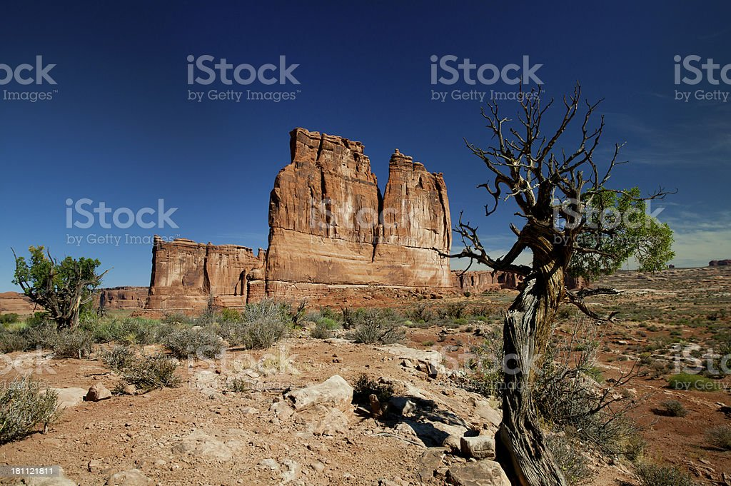 Bristlecone pine trees around Shiprock, Arches National Park, Utah royalty-free stock photo