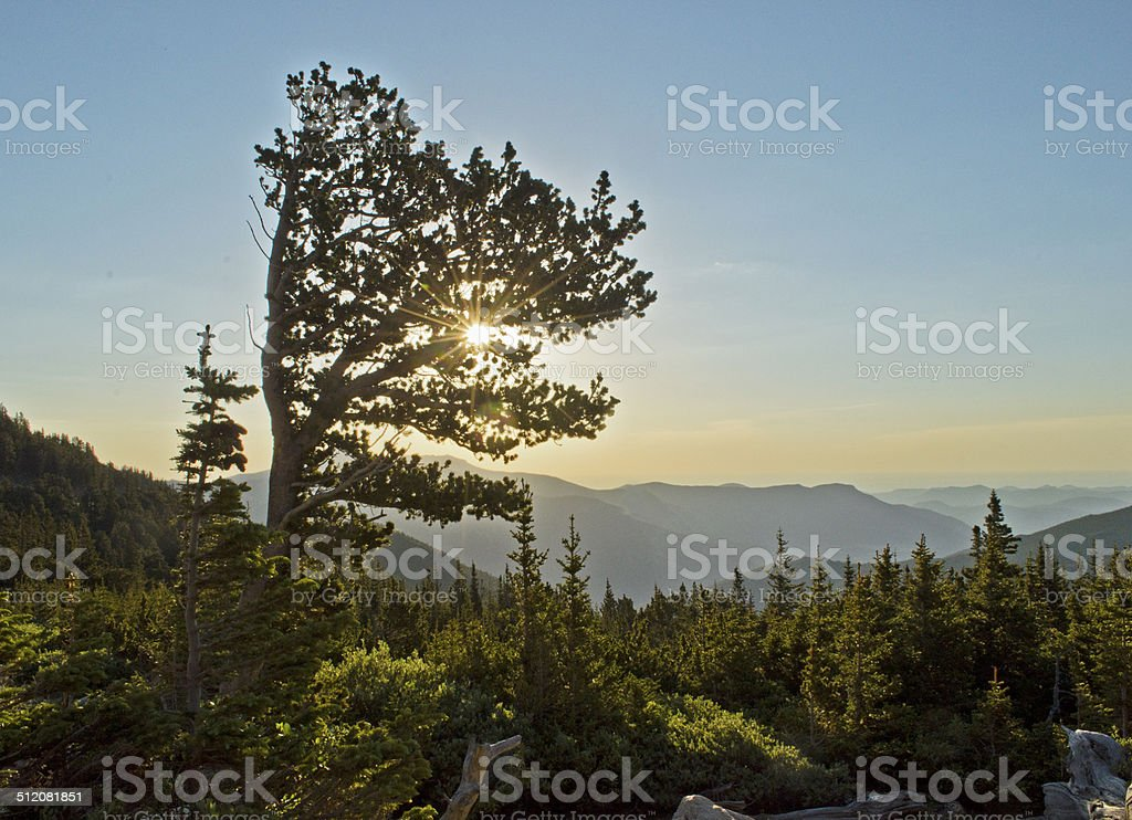 Bristlecone Pines in the morning stock photo