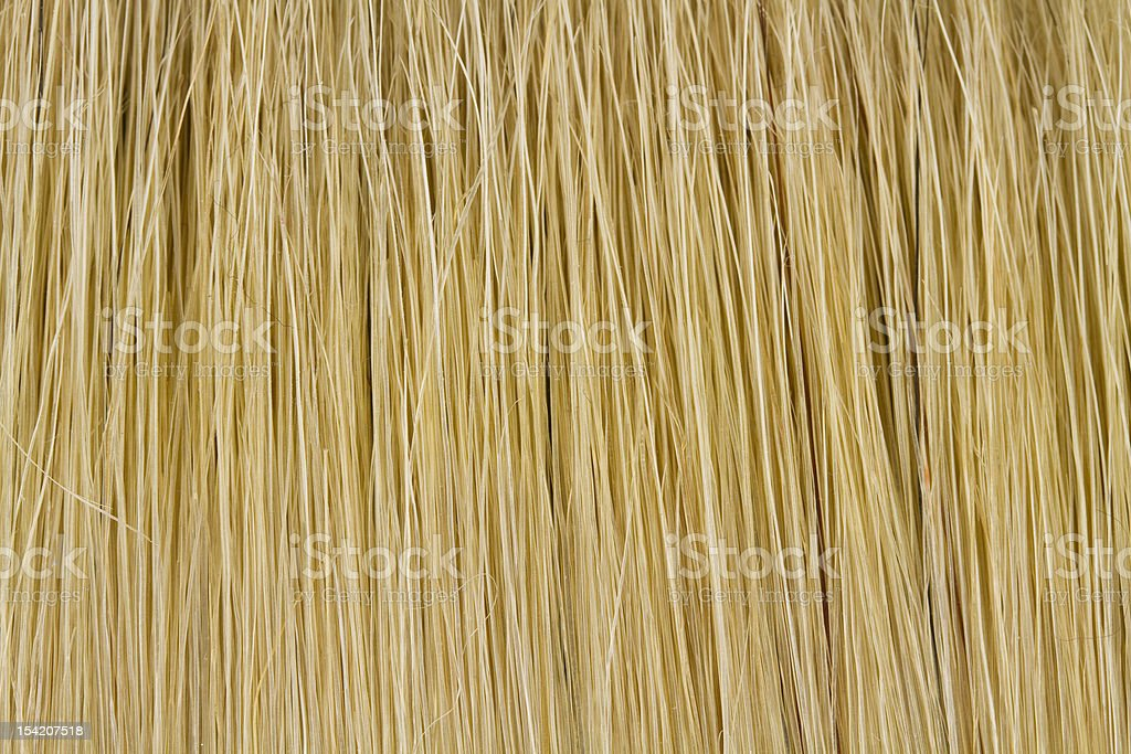 bristles royalty-free stock photo