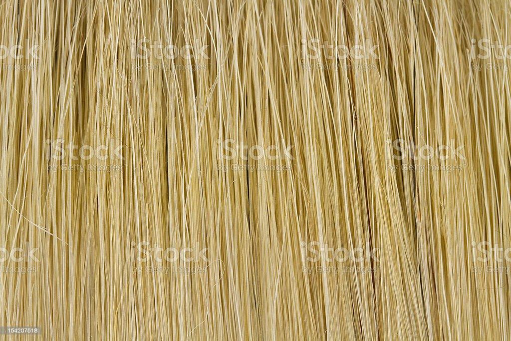 bristles stock photo