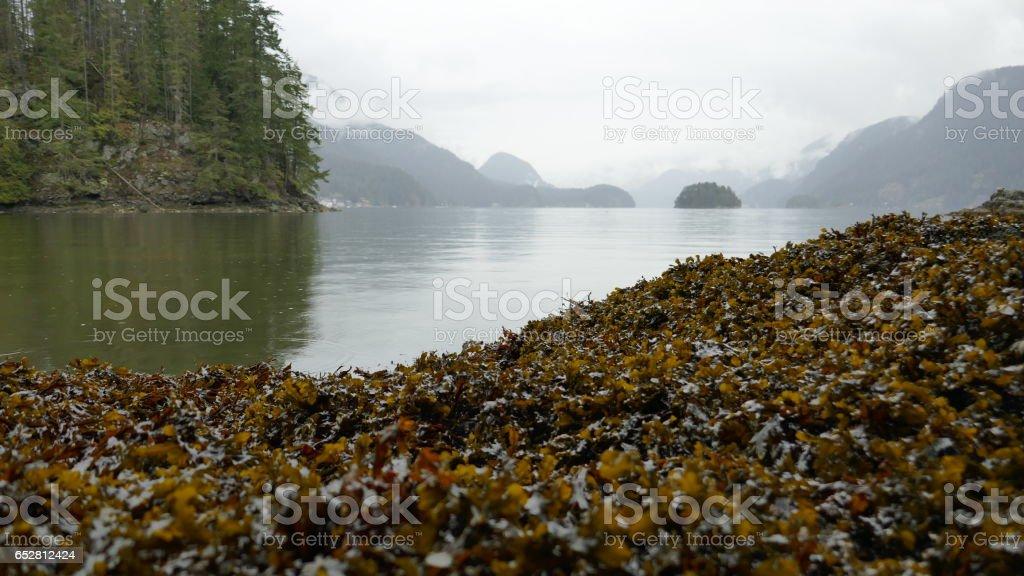 British Columbia Coastline stock photo