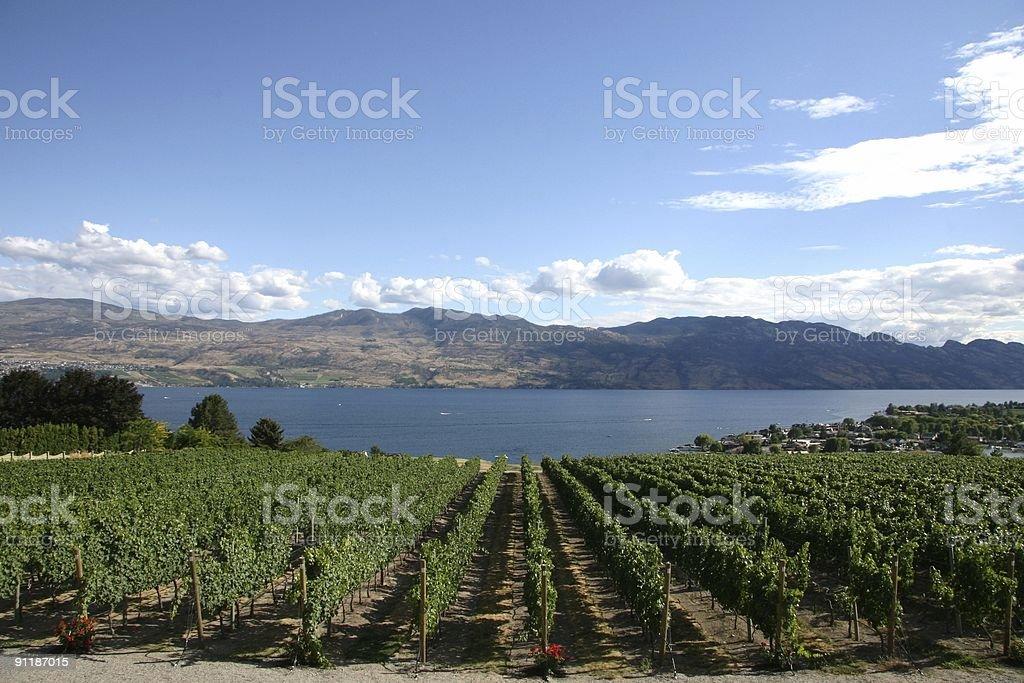 British Columbia Winery royalty-free stock photo