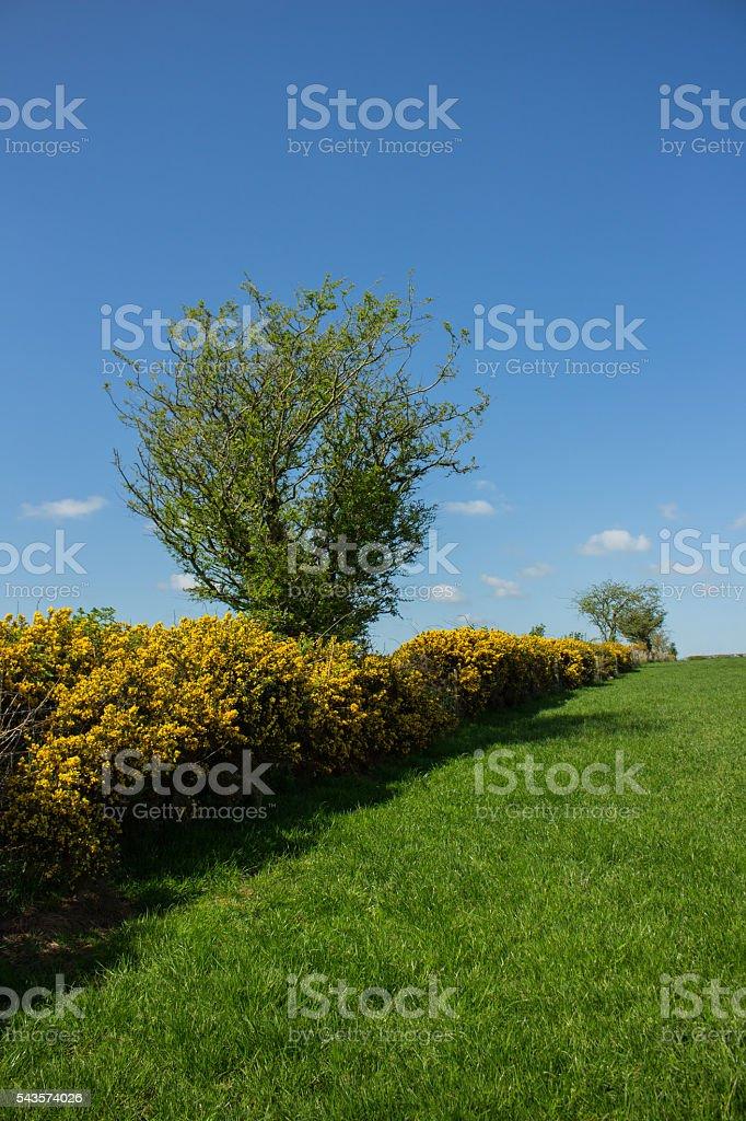 British Dairy Farm Hedgerow stock photo