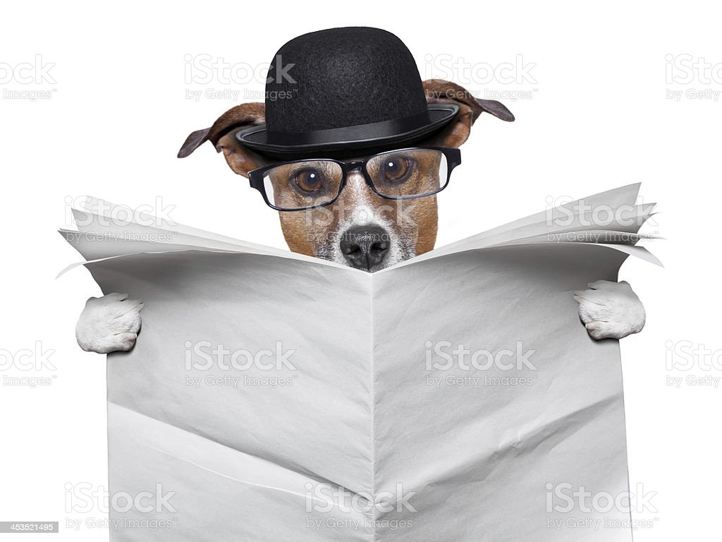 British dog reading royalty-free stock photo