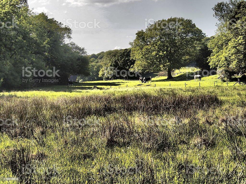 British Meadow royalty-free stock photo
