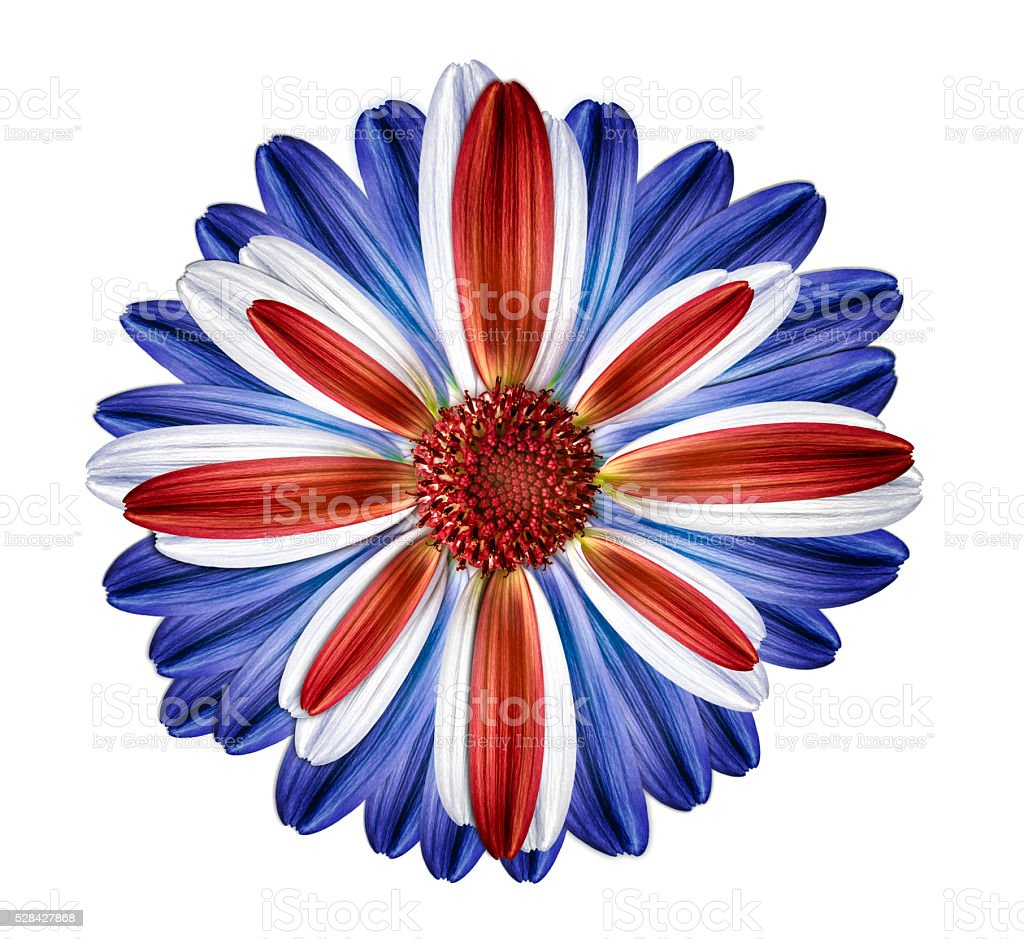 British themed flower united kingdom stock photo
